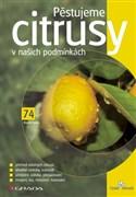 Pěstujeme citrusy v našich podmínkách